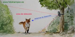 fototrampeo.es