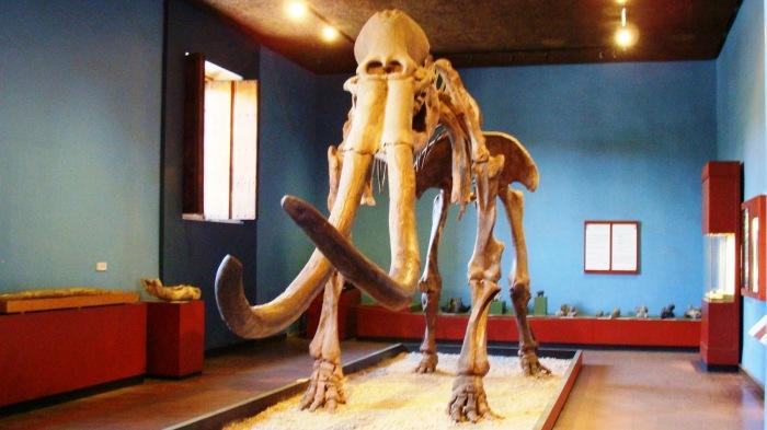 museo_regional_guadalajara_mamut